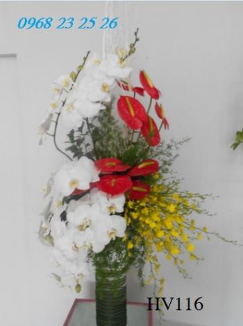 hoa vip    hv116