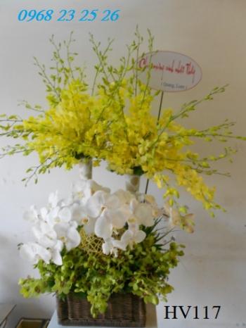 hoa vip    hv117