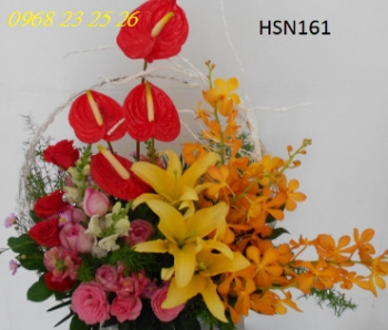hoa sinh nhat hsn161