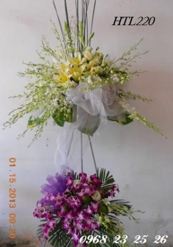 hoa tang le  htl220