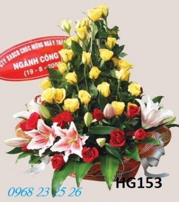 hoa gio  hg153