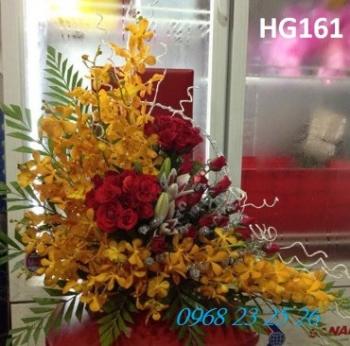 hoa gio  hg161