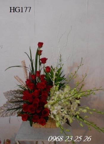 hoa gio  hg177